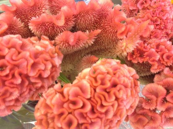 pink fuzzy flowers